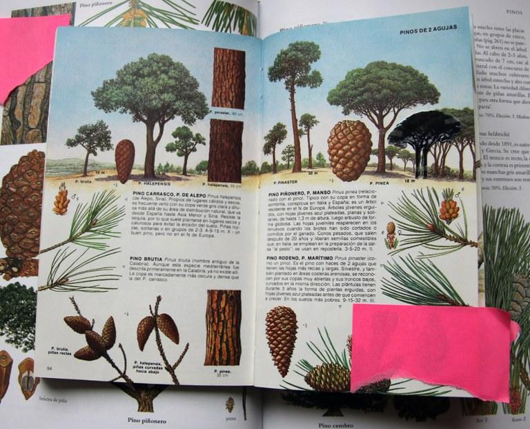 """Mariona Moncunill. Detall de l'obra """"Los árboles de Europa"""""""